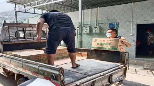 众志成城 抗击疫情丨龙头村:捐助爱心鸡蛋助力抗疫